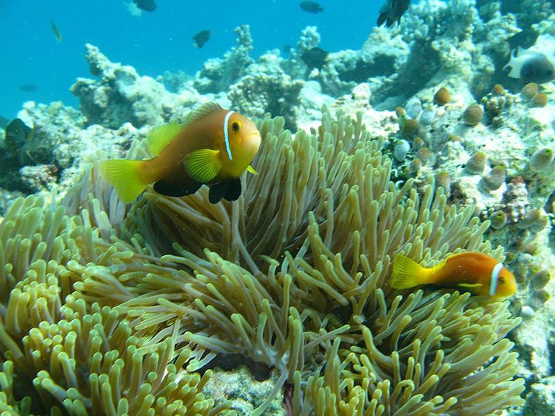 Beitragsbild: Malediven (Unterwasser)